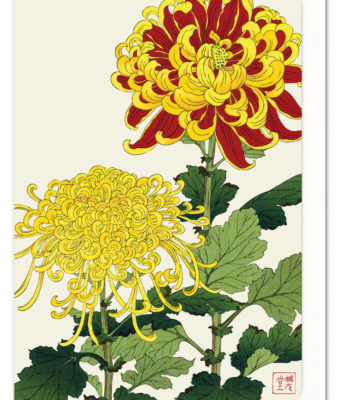 Chrysanthemum Ezen greeting card 5060378040409 FLW_19