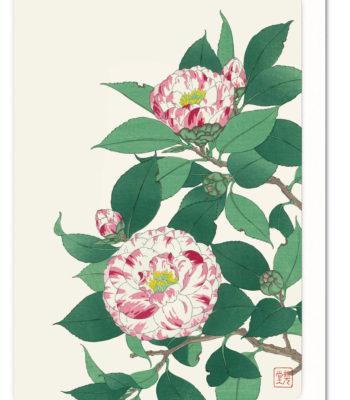 pink-camellia-ezen-greeting-card-5060378046500-flw_42