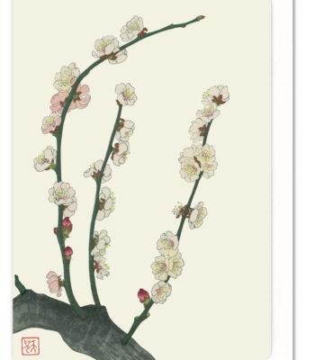 plum-blossom-ezen-greeting-card-5060378040225-flw_1