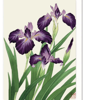 purple-iris-ezen-greeting-card-5060378040362-flw_15