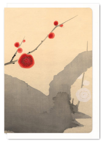 red-and-white-plum-blossom-5060378040263-flw_5